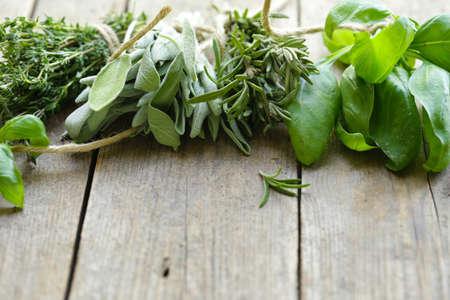 hierbas aromáticas verdes orgánicas frescas Foto de archivo