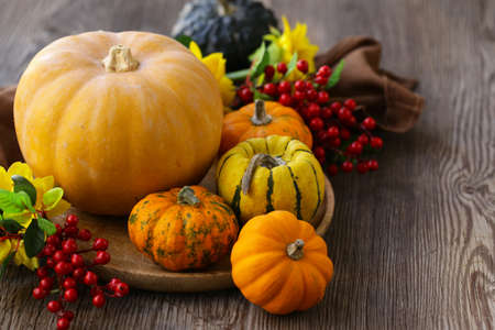 autumn still life with fresh pumpkins for decoration