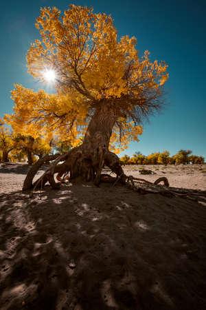 desert footprint: Tree roots