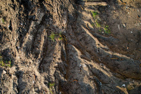 Background, tree roots on Earth