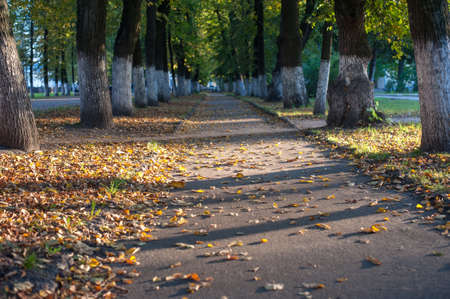 autumn alley shade and dry yellow leaves and long shadow