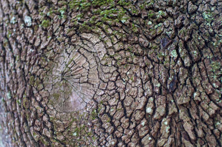 Tree bark closeup, dry and rough texture, background, filled the entire frame