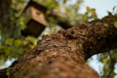 Macro shot of tree with birds house