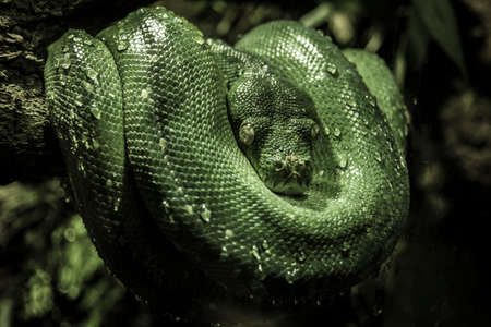 Green snake with closed eyes on a branch of a tree