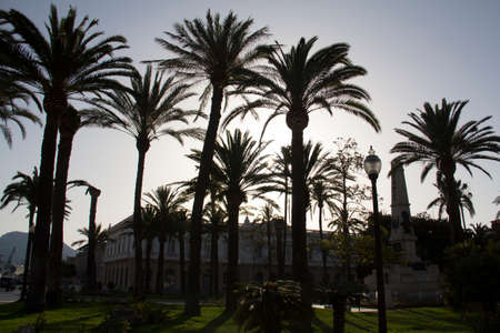 Big palm trees in front of a building and a sunny sky, due to the direct sunlight as the silhouettes with building in the background in cartagena in spain