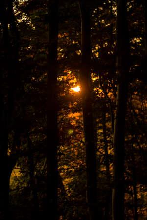 Sun shining through trees during sunset Stock Photo