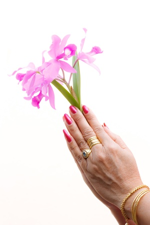 a woman hold pink orchid in your hands photo