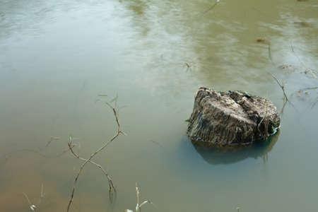 rivulet: Tree stump of teak in river.