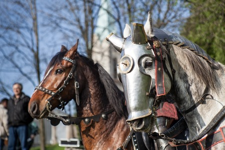 Horses dressed in knightly armor. Horses on the medieval battlefield.