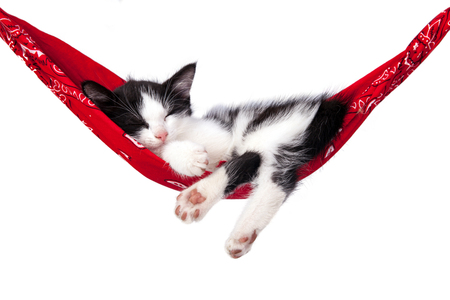 lazybones: Little kitten sleeps on a hammock. Small cat sleeps sweetly as a small bed. Sleeping cat on a white background. Cats rest after eating.