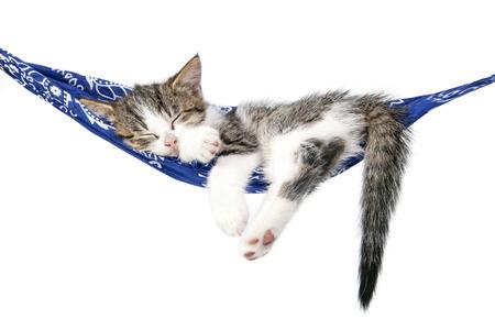 pies bonitos: Pequeño gatito duerme en una hamaca. Pequeño gato duerme dulcemente como una cama pequeña. Gato el dormir en un fondo blanco. Los gatos descansan después de comer.