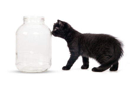 Small black cat and large jar on a white background. Stock Photo