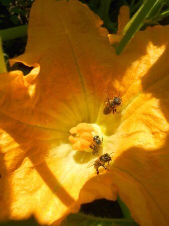 bevy: Bee company
