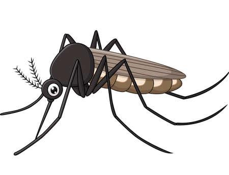 gnat: illustration of Cartoon mosquito on white background