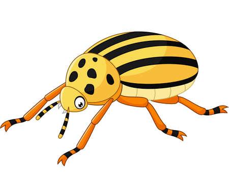 coleoptera: illustration of Cartoon Beetle