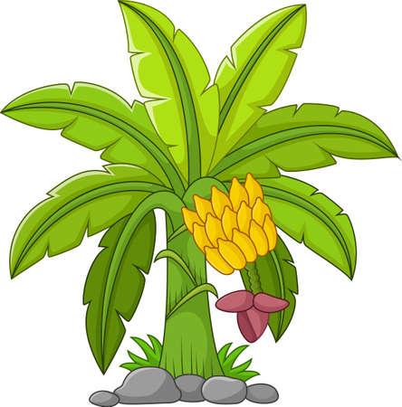 Banana tree on a white background