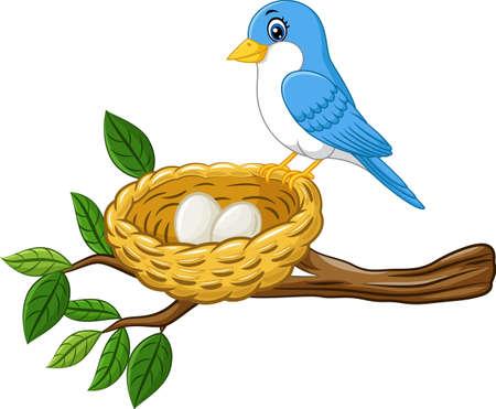 Oiseau avec l'oeuf dans le nid isolé sur fond blanc