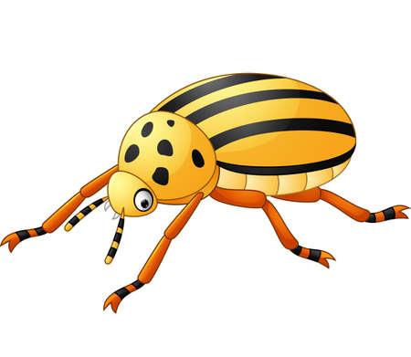 coleoptera: Cartoon Beetle