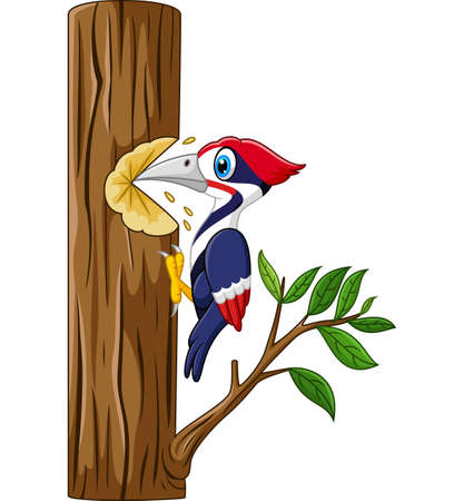 woodpecker: Woodpecker on the tree