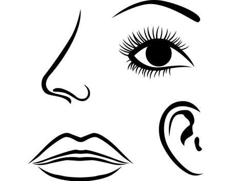 sensory perception: Eyes, nose, lips and ear icon
