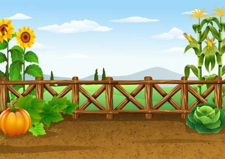 vector illustration of Farm background with various plant  イラスト・ベクター素材