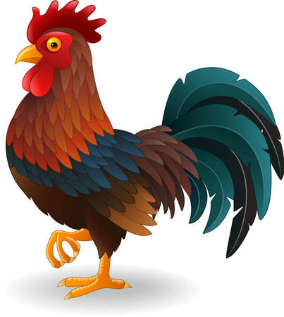 Vector illustration of Cute rooster cartoon Illustration