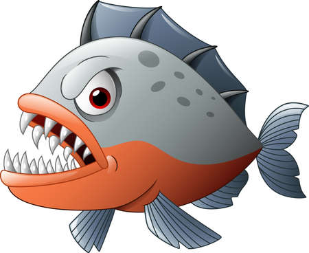 piranha: illustration of Angry piranha cartoon Illustration