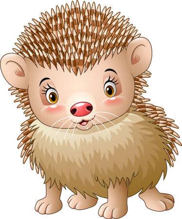 fodder: illustration of Cute baby hedgehog