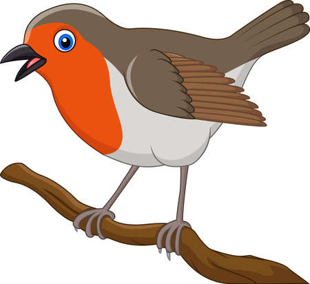 Vector illustration of Cartoon beautiful robin bird