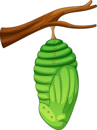 Vector illustration of Cartoon pupa of the butterfly Vectores
