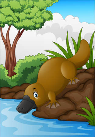 illustration of Cartoon platypus in forest creek