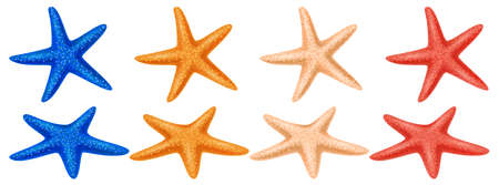 Set of colored starfish on a white background