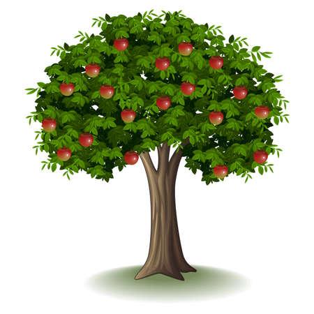Red apple on apple tree Imagens