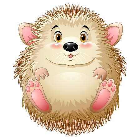 Cute baby hedgehog