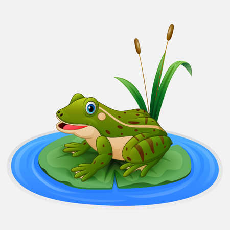 Green frog sits on a leaf in the pond
