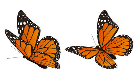 The monarch butterfly vector illustration