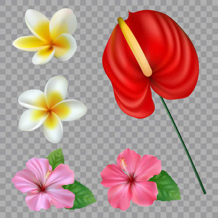 Set of Tropical flowers collection. Vector isolated elements on the white background Illusztráció