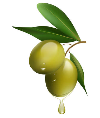 Green olive branch isolated on white background. realistic vector illustration Çizim