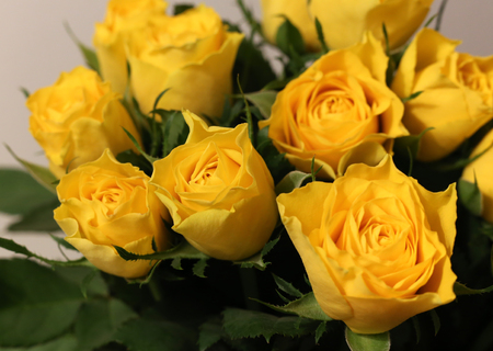 A bouquet made of bright yellow roses Stock Photo