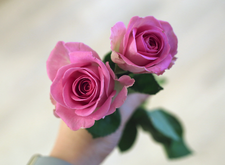 Two pink roses in a persons hand