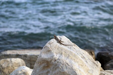 Cute small lizard on a rock during a hot sunny day in Cyprus. In the foreground there is rocks and the lizard and in the background Mediterranean Sea with some small waves. Color image.