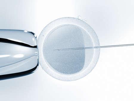 In vitro fertilisation