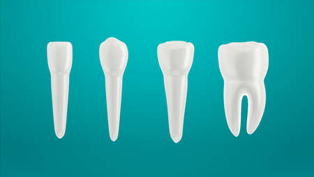 Teeth isolated on green background. Arranged in a row.  3d illustration. Incisor, canine premolar and molar. 写真素材