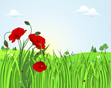 Cute landscape with poppies in the grass with dew drops, ladybugs and butterflies against the sunny sky with clouds  Illustration  Vector