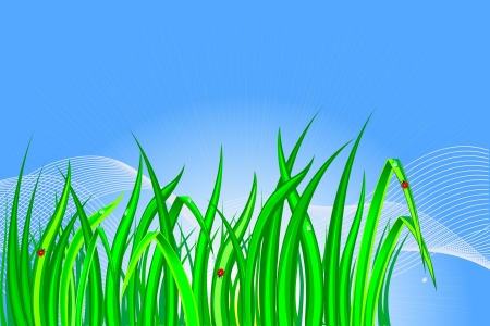 Grass with dewdrops and ladybirds Vector