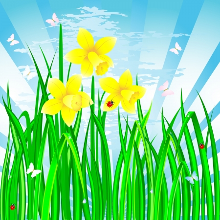 Spring landscape with the daffodils, grass and ladybirds Vector
