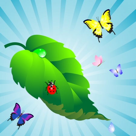 Green leaf with drops and ladybird, butterflies Vector