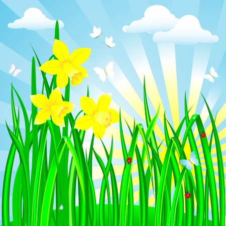 Spring landscape with the daffodils  Illustration