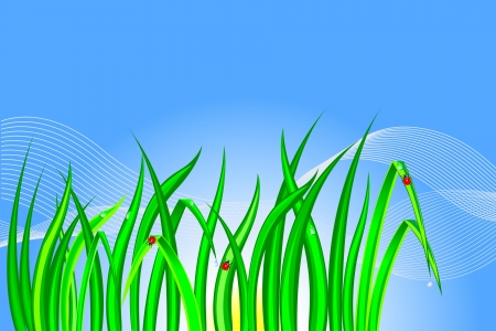 Grass with dewdrops and ladybirds Stock Vector - 17213906