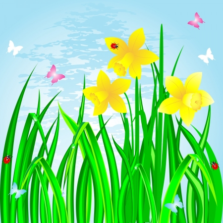 Spring landscape with the daffodils, grass and ladybirds.  Vector